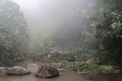 Nature scene of a fog in a forest. Taken on the way along Levada do Risco in Lombo do Doutor on Madeira island royalty free stock photography