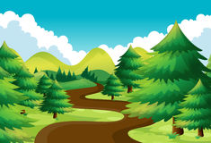 Nature scene with hiking track in the pine woods. Illustration Stock Image