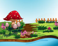 Nature scene with mushroom and river Stock Photos