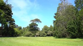 Nature scene of San Francisco Botanical Garden. At San Francisco, California, United States stock video footage
