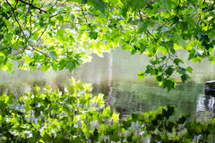Nature scene. Spring tree reflected in water. Royalty Free Stock Photo