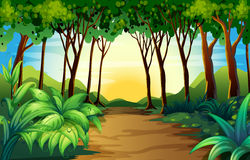 Nature scene with track in the woods. Illustration Royalty Free Stock Photos