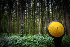 Nature scene with yellow umbrella Stock Photography