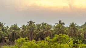 Nature scenery. Beautiful evening time landscape palm trees nature silhouette Stock Photos