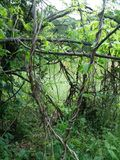 Explore the magic of nature. Nature scenery beautiful Royalty Free Stock Photos
