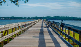 Free Nature Scenes Around Hunting Island South Carolina Royalty Free Stock Images - 58717569