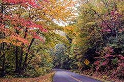 Nature scenes on blue ridge parkway great smoky mountains Stock Photos