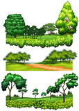 Nature scenes with trees and fields Stock Images