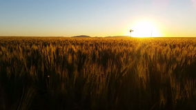 Nature Scenic Wheat field farming sunset landscape with wind mill stock video