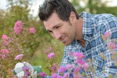 Nature scientist observing wild flower Royalty Free Stock Photography