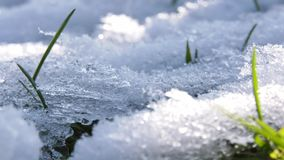 Nature se réveillant après l'hiver banque de vidéos