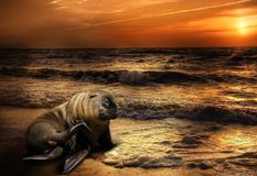 Nature, Sea, Beach, Meeresbewohner Stock Photos