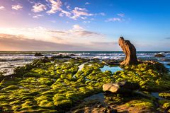 Nature Seascape with Exotic Boulder and Green Moss Covered Rocks in The Morning Sunshine stock photos