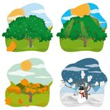 Nature season design. Autumn spring winter and summer tree of nature season and element theme Vector illustration Royalty Free Stock Photography
