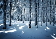 Snowy fairy dense forest. Nature seasonal background snowy fairy dense forest Royalty Free Stock Images