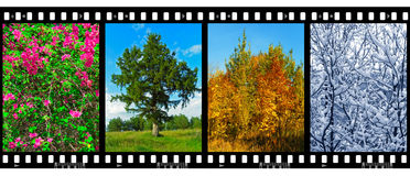 Nature seasons in film frames (my photos) Stock Image