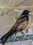 Nature shot of bird Royalty Free Stock Photography
