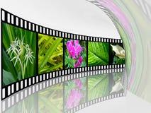 Nature shots Royalty Free Stock Photography