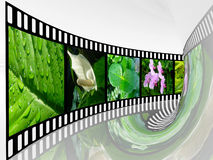 Nature shots. Film roll with color pictures (nature) in the tunnel Royalty Free Stock Photography