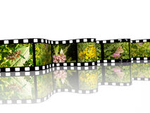 Nature shots. Film roll with color pictures (nature) on white background Royalty Free Stock Image
