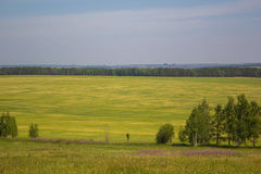 The nature of Siberia field sky sun Royalty Free Stock Photo