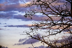 Nature. Silhouette tree cloud sky Royalty Free Stock Photo