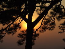 Silhouette. Wallpaper view tree Stock Images