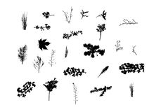 Nature silhouettes collection Royalty Free Stock Photography