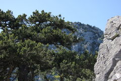 The nature of Simeiz.Crimea Royalty Free Stock Photography