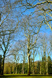 nature simple Στοκ εικόνες με δικαίωμα ελεύθερης χρήσης
