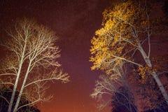 Nature, Sky, Night, Tree stock photography