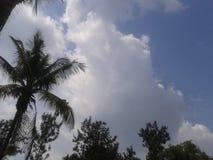 Nature. Skyline sky Stock Image