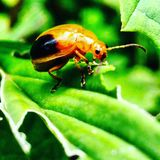 The nature stock photography