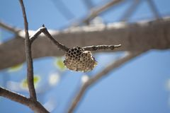Small Large Wasp Nest royalty free stock images