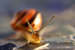 The Nature Of The, Snail, Macro Stock Photo