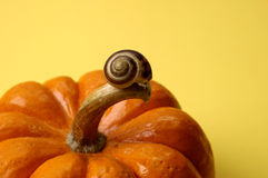 Nature - Snail on Pumpkin Stock Photos
