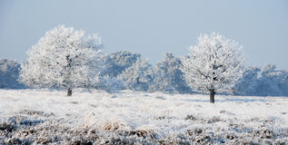 Nature and Snow Royalty Free Stock Photography