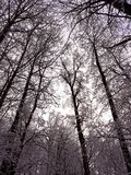 Nature. Snow on trees Stock Images