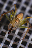 Nature of spider in the house Royalty Free Stock Photography