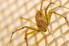 Nature of spider in the house Stock Images