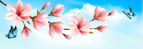 Nature spring background with beautiful magnolia branches Stock Photo
