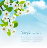 Nature spring background with blossoming tree brunch. And blue sky. Vector illustration Royalty Free Stock Photos