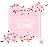 Nature spring background with cherry blossoms. stock image