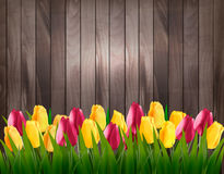 Nature spring background with colorful tulips on wooden sign. Royalty Free Stock Images
