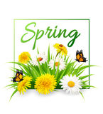 Nature spring background with grass, flowers and butterflies. Vector Royalty Free Stock Image