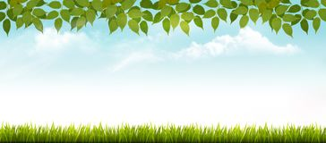 Nature spring background with grass and leaves. vector illustration