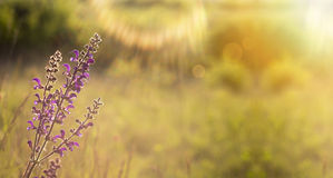 Nature spring banner Stock Photography
