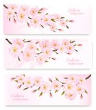 Nature spring banners with al pink sakura branches. Vector Stock Image