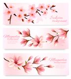 Nature spring banners with beautiful magnolia branches. Vector Royalty Free Stock Photos