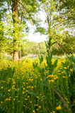 Nature in spring Royalty Free Stock Images